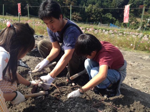 イモ掘り2014.JPG