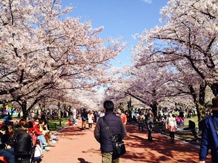 4月6日 万博公園 (4).JPG